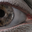High res eye in LW6